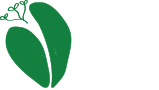 Hava Studios